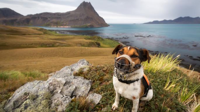 Помощь собак-сыщиков в проекте ликвидации грызунов рисунок2